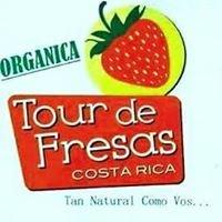 TOUR DE FRESAS COSTA RICA