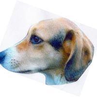 Ashley Animals Mobile DOG Grooming