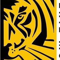 Tiger Window Tinting
