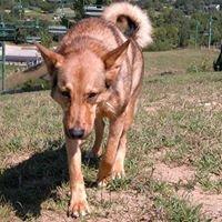 Bowwow Know-how Dog Training