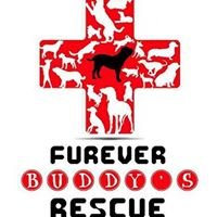Furever Buddy's Dog Rescue