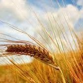 Finest Grains - Natural & Organic Products, LLC