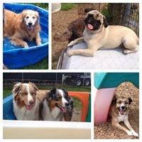 Poco's Playhouse Dog Daycare