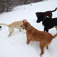 Wagging Tails On The Trails