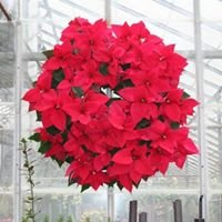 Chadds Ford Greenhouses