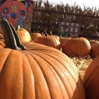 Pa's Pumpkin Patch