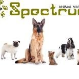 Spectrum Animal Massage