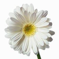 Imlay City Florist, LLC