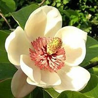 Magnolia State Pharmaceutical Society