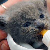 Alley Cat Advocates Big Fix