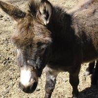 Silver Ridge Donkey Haven