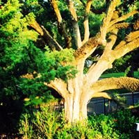 Sun Tree Yoga