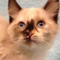 Sacramento Area Pet Rescue Group