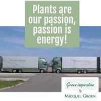 Micquel Groen: green inspiration, M.G. Plantenexport BV