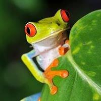RainForest Real Estate Costa Rica  Bienes Raices Costa Rica