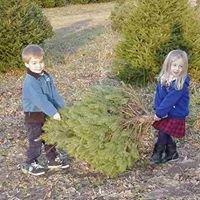 Albert Family Tree Farm and Nursery