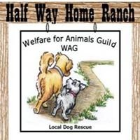 WAG   Welfare for Animals Guild