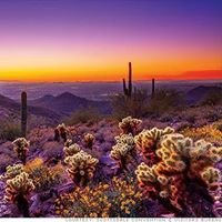 Scottsdale Home Trends