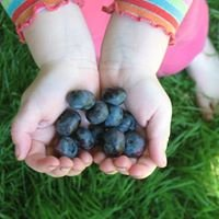 Farm to Family: An Organic Food (and more!) Club