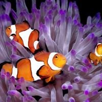 South Seas Aquatics