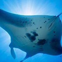 Aqua Divers International Pty Ltd