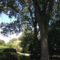 Rosa Lawn & Tree, LLC