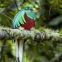 Cabinas Quetzal San Gerardo