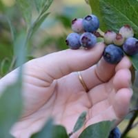 Russell Blueberry Farm