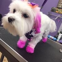 Furry N' Fabulous Pet Salon