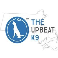 The Upbeat K9 - Boston