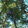 Travis Tree Professionals