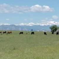Johnson's Acres Raw Milk Dairy