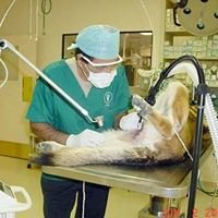 Hesperia Animal Hospital