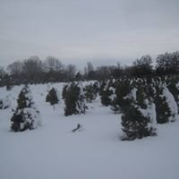 Country Loving Christmas Tree Farm