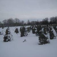 Country Loving Christmas Tree Farm