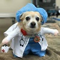 Surprise Animal Hospital, PLC & Grooming