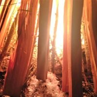 Tribal Edge Earth Vigil Fire