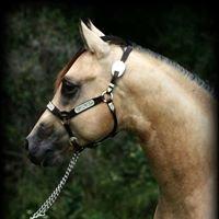 Bruner Quarter Horses