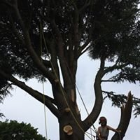 Taylor's Tree Services