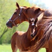 Rick Skelly Quarter Horses