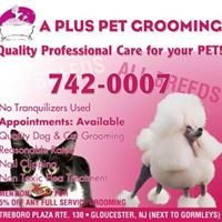 A PLUS PET GROOMING