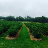 Payeur's Blueberry Farm