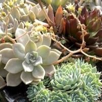 Botanical Art Designs