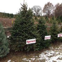 Bina's Christmas Tree Farm