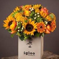 Igloo Flowers