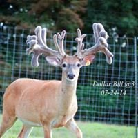 Young Bucks Whitetails