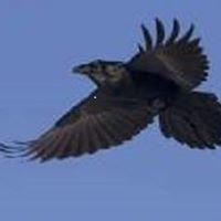 Raven Firearms Training