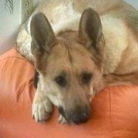 Petiquette Canine Charm School and Salon