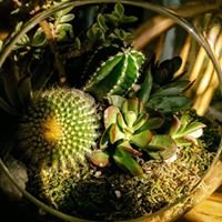 Sunshine Botanical Designs