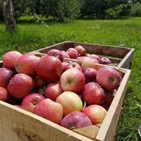 Quednow's Heirloom Apple Orchard